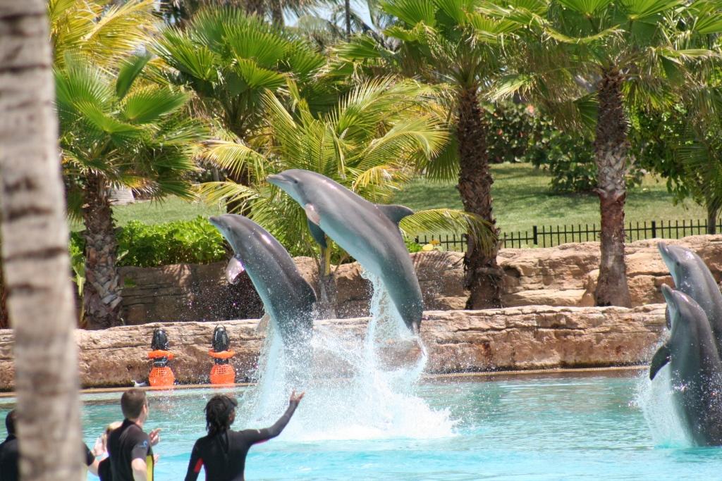 Atlantis-bahamas-getaway-seminars-continuing-eduction-pharmacists-4
